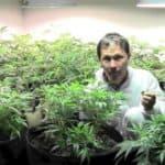 Beginners Tips To Grow Weed Indoors