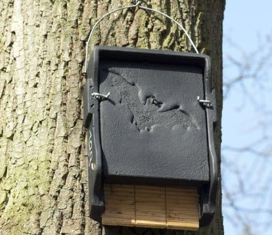 the best bat house