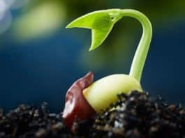 Marijuana Plant Life Cycle